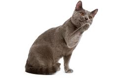 Dueños-sentido-gatito