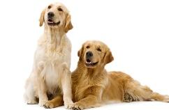 Dueños-perro-guia