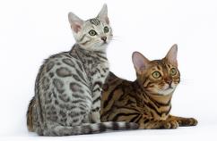 Dueños-Segundo-Gato
