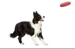 Dueños-ejercicio-perros