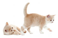 MiRC-Sociabilizacion-gatitos