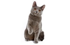Dueños-adiestramiento-gatos