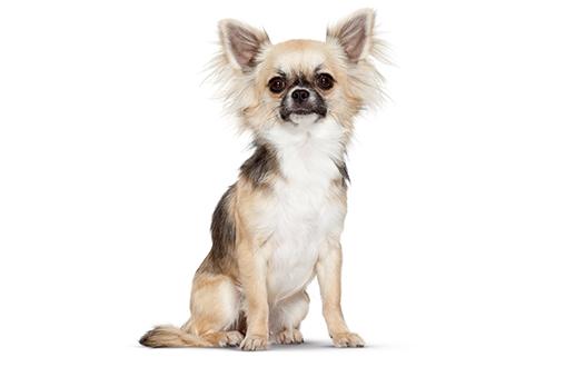 Dueños-Perro-indoor