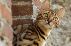 Consejos para disfrutar el verano con tu gato