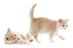 La importancia del juego gatitos