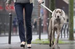 Caminar con tu perro 1