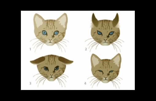 El lenguaje gestual de los gatos 2