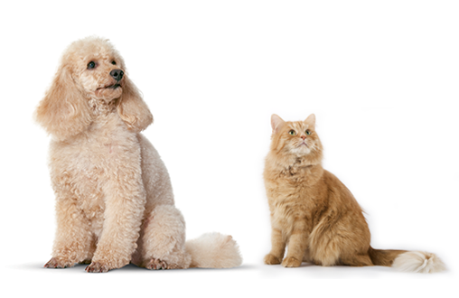 La convivencia entre perros y gatos 1
