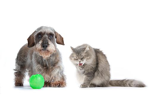 La convivencia entre perros y gatos 2