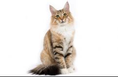 El lenguaje gestual de los gatos 3