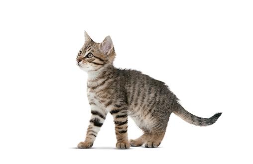Higiene dental para gatos