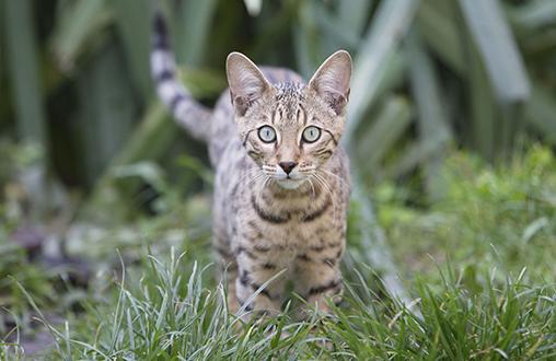 Tips para proteger a tu gato durante el verano 2