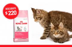 Imagen promoción Kitten 36