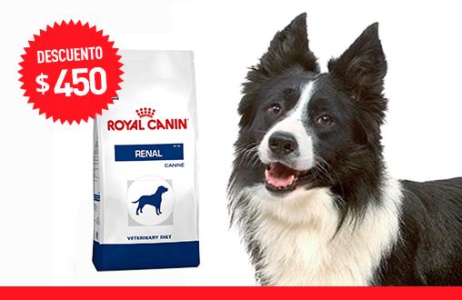 Imagen promoción Renal Canine