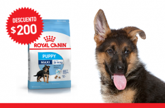 Imagen promoción Maxi Puppy