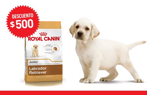 Imagen promoción Labrador Retriever Junior