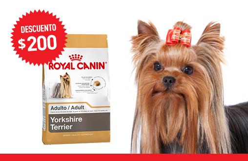 Imagen promoción Yorkshire Terrier Adulto