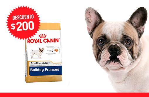 Imagen promoción Bulldog Francés Adulto