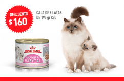 Imagen promoción Mother & Babycat Húmedo