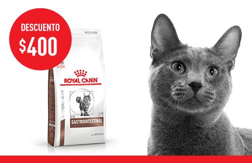 Imagen promoción Gastrointestinal Feline
