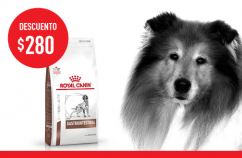 Imagen promoción Gastrointestinal Canine