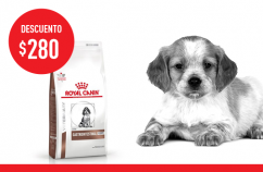 Imagen promoción Gastrointestinal  Puppy Canine